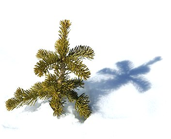 tree-snow-shadow