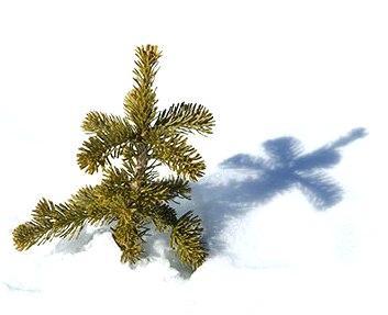 tree-snow-shadow