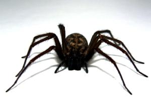 s_spider-2